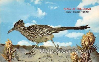 yan010128 - Color Photo by Ferris H Scott Desert Road Runner Postcard Post Card