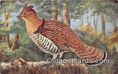 yan010133 - Ruffed Grouse Postcard Post Card