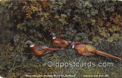 yan010144 - Northwest China Pheasants Postcard Post Card