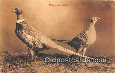 yan010145 - Chinese Pheasants Postcard Post Card