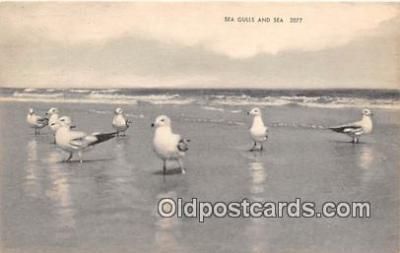 yan010155 - Sea Gulls Postcard Post Card
