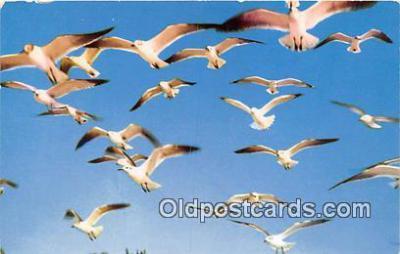 yan010161 - Seagulls Postcard Post Card