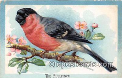 yan010171 - Bullfinch Postcard Post Card