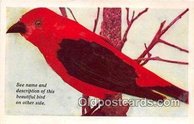 yan010177 - Des Moines, Iowa, USA Scarlet Tanager Postcard Post Card