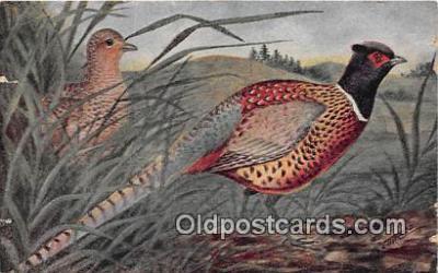 yan010203 - Ring Necked Pheasant Postcard Post Card