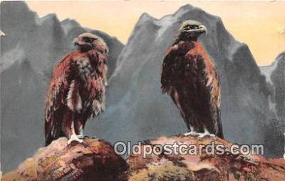 yan010209 - Bald Eagle Postcard Post Card
