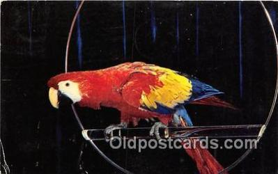 yan010216 - Color by Hall Red & Blue Macaw, Ara Macao Postcard Post Card