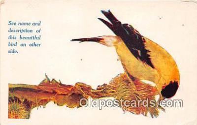 yan010220 - Des Moines, Iowa, USA American Goldfinch Postcard Post Card