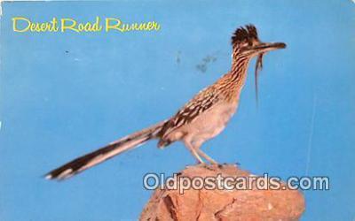 yan010221 - Desert Road Runner Postcard Post Card