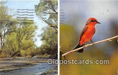yan010223 - Arizona, USA Patagonia Sonoita Creek Sanctuary Postcard Post Card