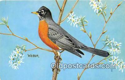 yan010227 - North American Robin Postcard Post Card