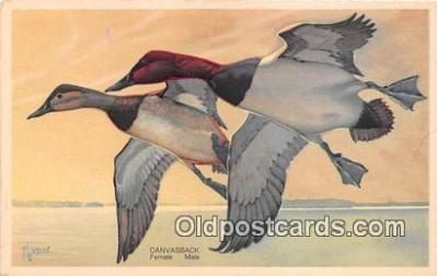 yan010248 - Alaska, Oregon, Nevada Canvasback, Male & Female Postcard Post Card