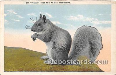 yan020010 - White Mountains Nutty Postcard Post Card