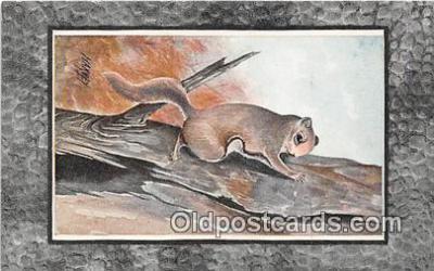 yan020024 - Flying Squirrel Postcard Post Card