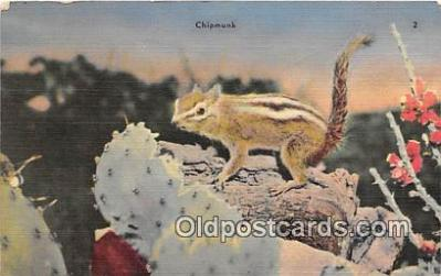 yan020025 - Chipmunk Postcard Post Card