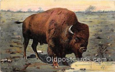 yan030001 - Buffalo Postcard Post Card