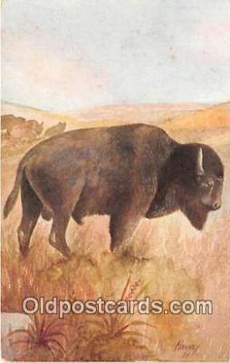 yan030033 - American Buffalo Postcard Post Card
