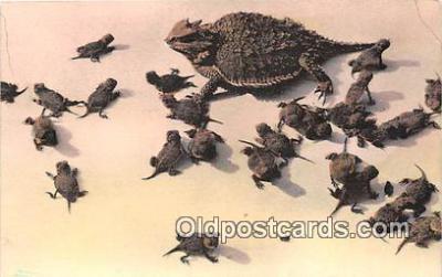 yan040016 - Adamana, AZ, USA Horned Toads, Petrified Forest National Monument Postcard Post Card