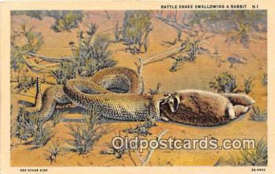yan040018 - Rattle Snake, Rabbit Postcard Post Card