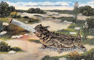 yan040020 - Texas, USA Texas Horned Toad Smoking a Cigarette Postcard Post Card