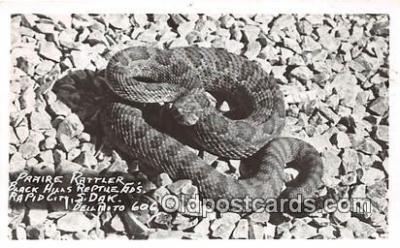 yan040025 - Rapid City, SD, USA Praire Rattler, Real Photo Postcard Post Card