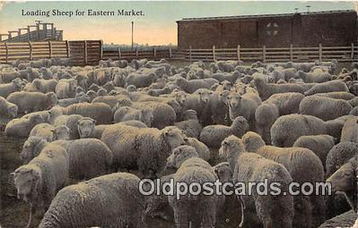 yan050008 - Eastern Market Loading Sheep Postcard Post Card