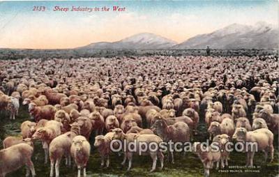 yan050012 - West Sheep Industry Postcard Post Card