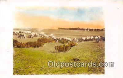 yan050024 - Postcard Post Card