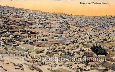 yan050025 - Western Range Sheep Postcard Post Card