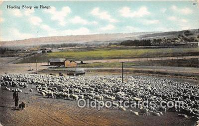 yan050028 - Herding Sheep Postcard Post Card