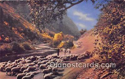 yan050033 - Western Canyon Postcard Post Card