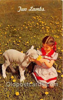 yan050037 - Two Lambs Postcard Post Card