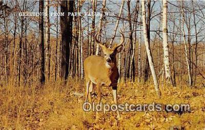 yan060003 - Park Falls, Wis, USA Greetings from Postcard Post Card