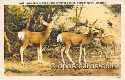 yan060005 - Western North Carolina, USA Wild Deer, Pisgah National Forest Postcard Post Card