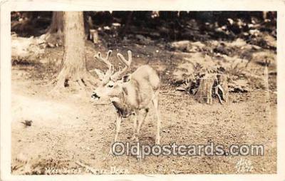 yan060008 - Washington, USA Real Photo - Washington Native Deer Postcard Post Card
