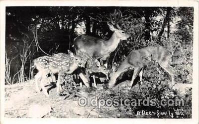 yan060012 - Deer Family Postcard Post Card