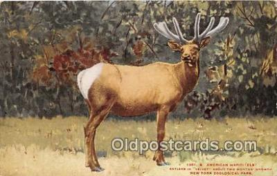 yan060013 - New York Zoological Park, USA American Wapiti Elk Postcard Post Card