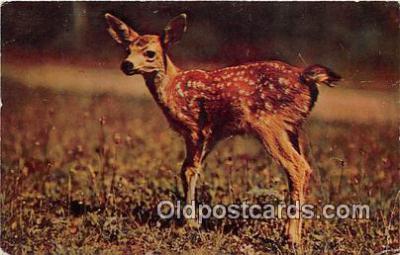 yan060014 - Little Dear Postcard Post Card