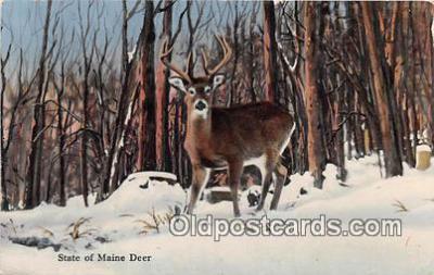 yan060015 - Maine, USA Maine Deer Postcard Post Card