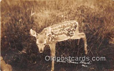 yan060021 - Real Photo Chase Pond Postcard Post Card