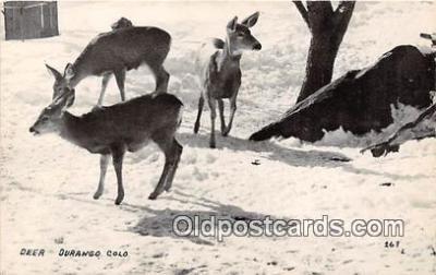 yan060036 - Durango, CO, USA Deer Postcard Post Card