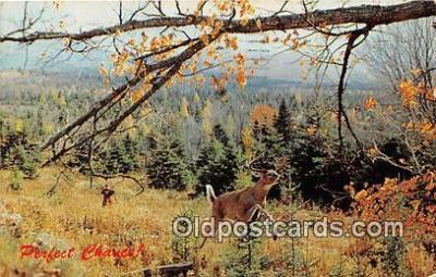 yan060039 - Color Photography by Ozzie Sweet  Postcard Post Card