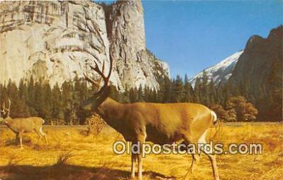 yan060040 - Yosemite National Park, USA Deer Postcard Post Card