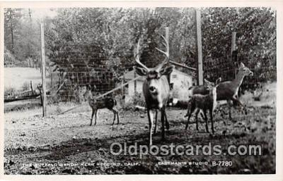 yan060044 - Redding, CA, USA Buffalo Ranch Postcard Post Card