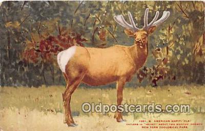 yan060045 - New York Zoological Park, USA American Wapiti Elk Postcard Post Card