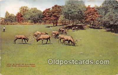 yan060046 - New York Zoological Park, USA Elk Herd Postcard Post Card