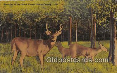yan060049 - Potter County Black Forest Postcard Post Card