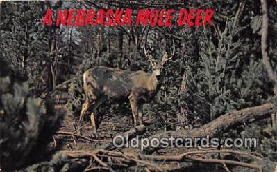 yan060052 - Nebraska, USA Mule Deer Postcard Post Card