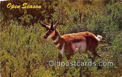 yan060053 - Open Season, Antelope Postcard Post Card