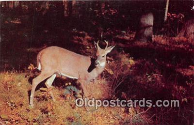 yan060055 - Pennsylvania, USA  Postcard Post Card